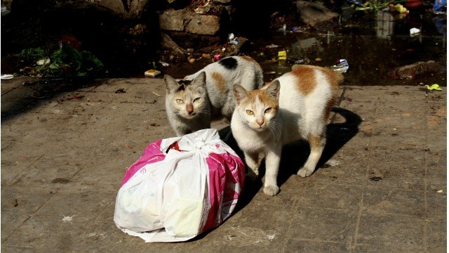 Cats and trash