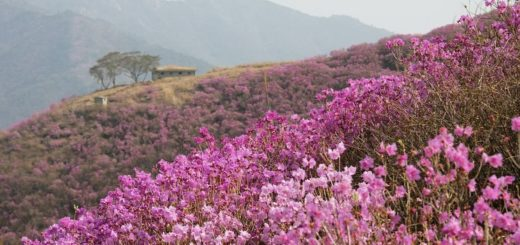 flowers blooming on the mountains
